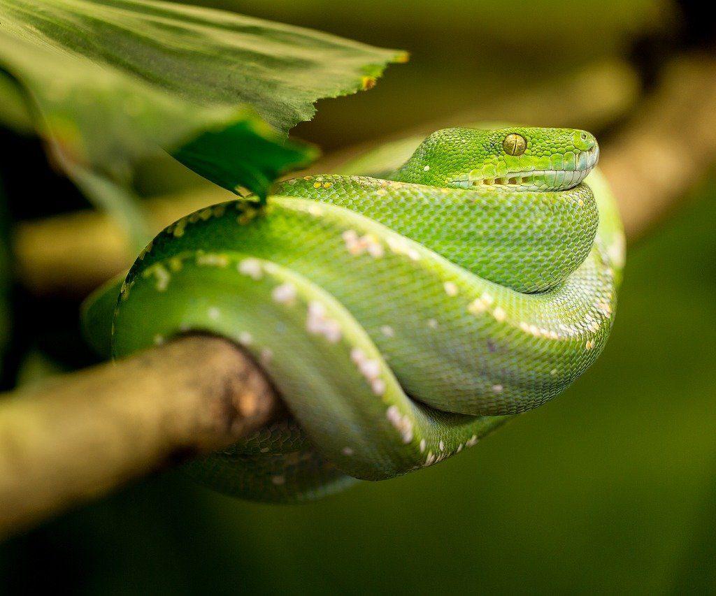 rêver de serpent