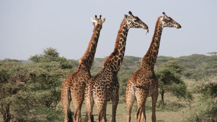 Safari de luxe en Tanzanie: Présentation