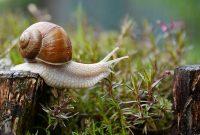 Bave d'escargot: Le soin du visage à connaître